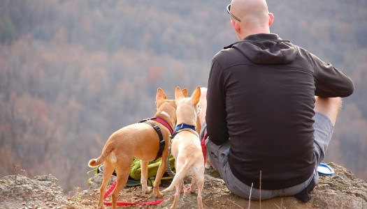 5 Hidden Costs of Traveling with Dogs