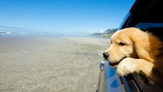 dog-car-620x350