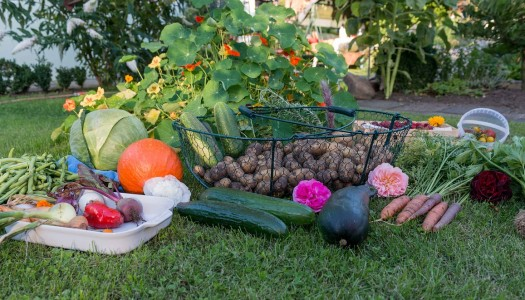 Rising cost of health: the grow your own solution