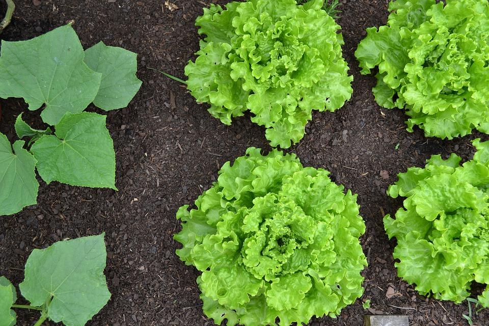 vegetable-garden-1533962_960_720