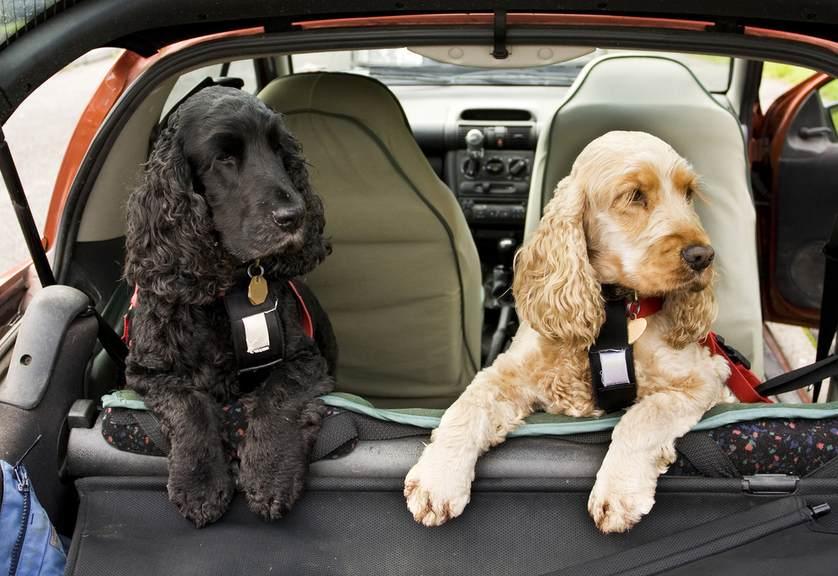 dogs-in-the-car.jpg.838x0_q67_crop-smart