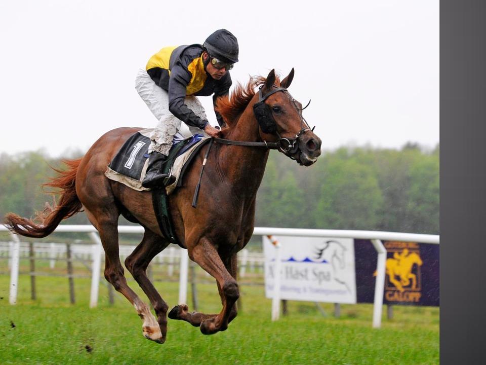 gallop-1117183_960_720