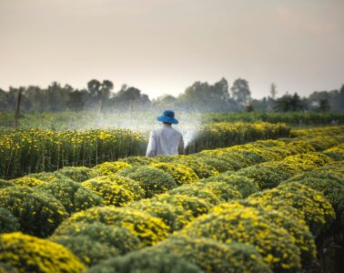 3 Interesting Financial Facts to Know About the Agriculture Industry